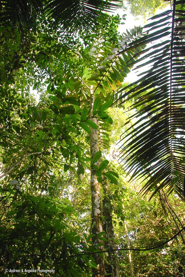 an-Cuyabeno-2009-12-31_DSC_0986.jpg