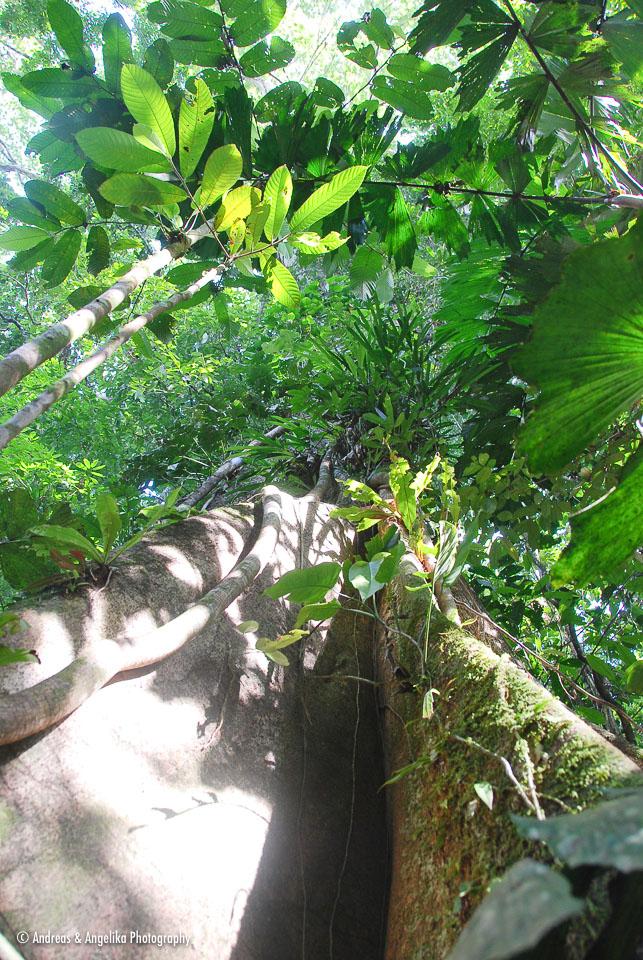 an-Cuyabeno-2009-12-31_DSC_0996.jpg
