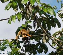 an-Cuyabeno-2009-12-29_DSC_0647.jpg