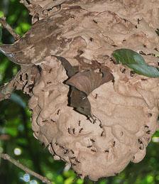 an-Cuyabeno-2009-12-30_DSC_0810.jpg