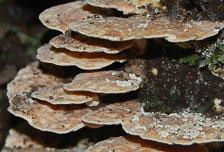 an-Cuyabeno-2009-12-31_DSC_1037.jpg