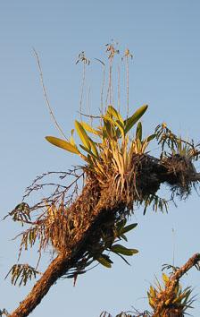 an-Cuyabeno-2010-01-01_DSC_1313.jpg
