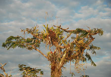 an-Cuyabeno-2010-01-03_DSC_1765.jpg