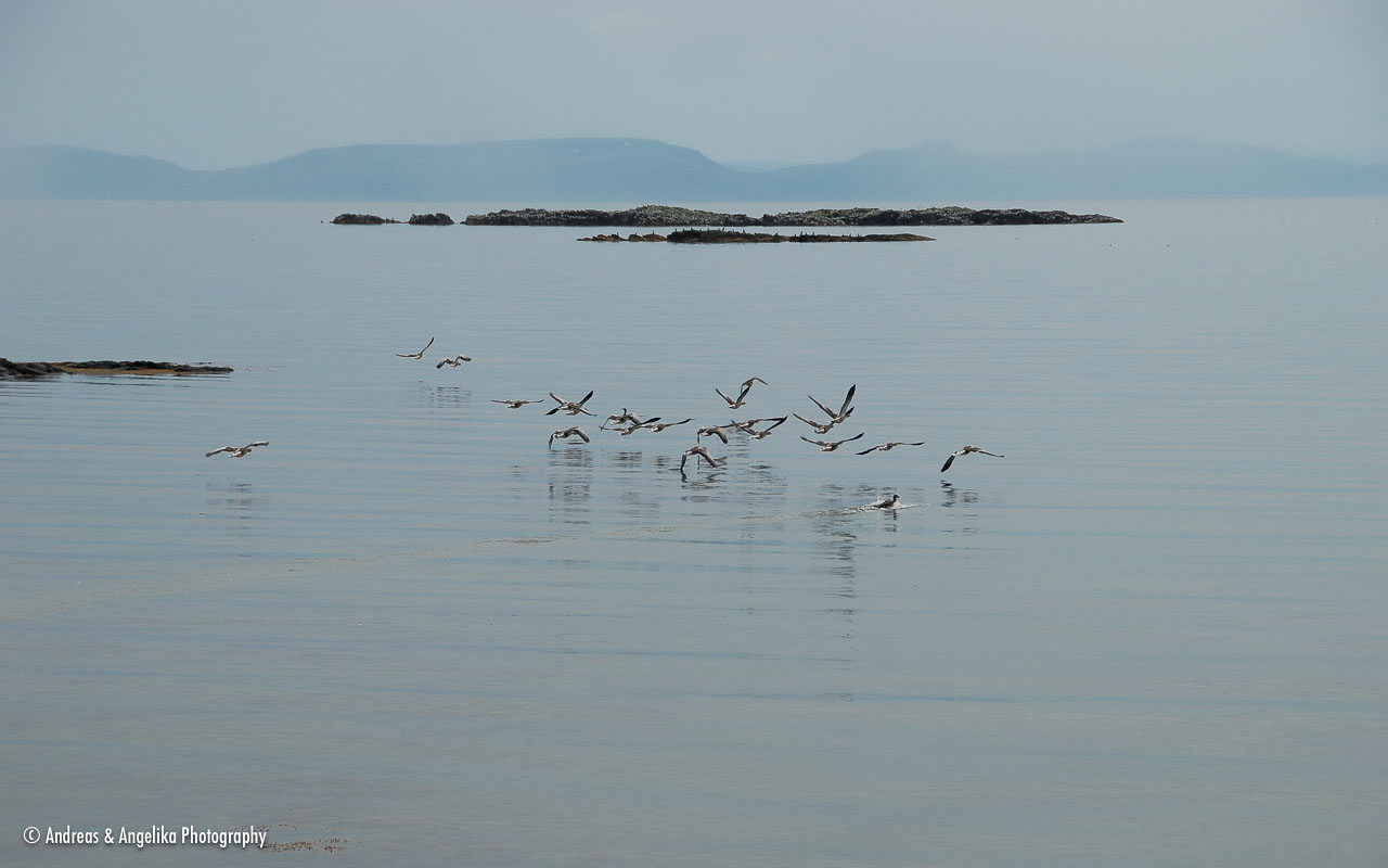 an-Island-2010-08-15_DSC_5636.jpg