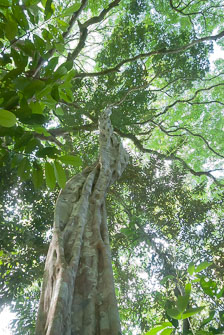 an-Pantanal-2011-08-07_DSC_1376.jpg