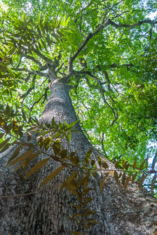 an-Pantanal-2011-08-07_DSC_1383.jpg