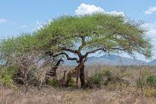 an-Tansania-2019-02-03__DSC5099.jpg