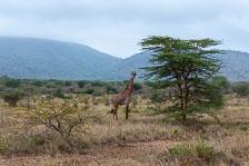 an-Tansania-2019-02-04__DSC5261.jpg